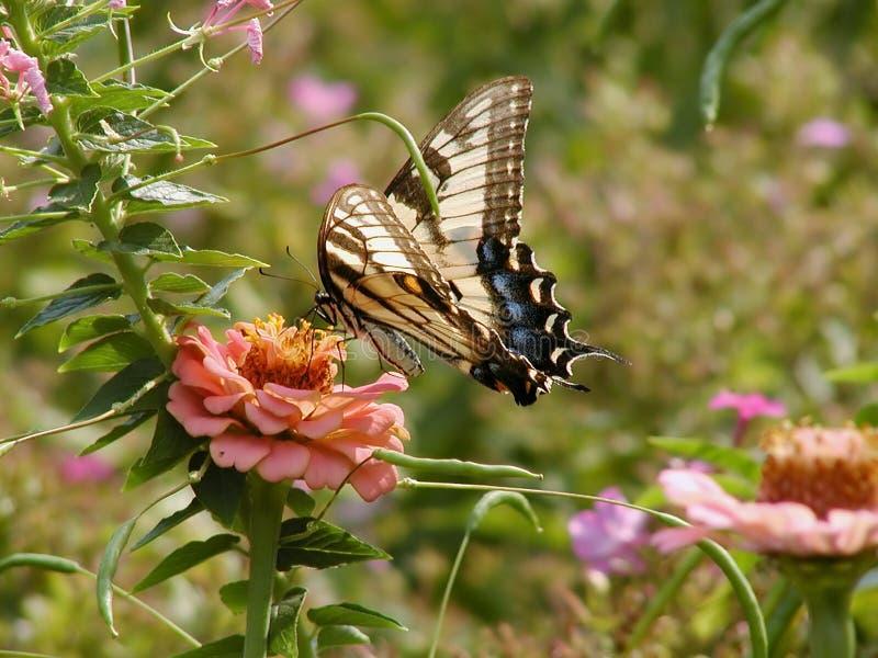 Download бабочка стоковое изображение. изображение насчитывающей green - 84175