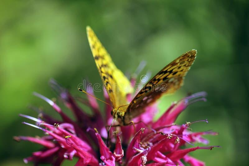 бабочка bokeh стоковое фото