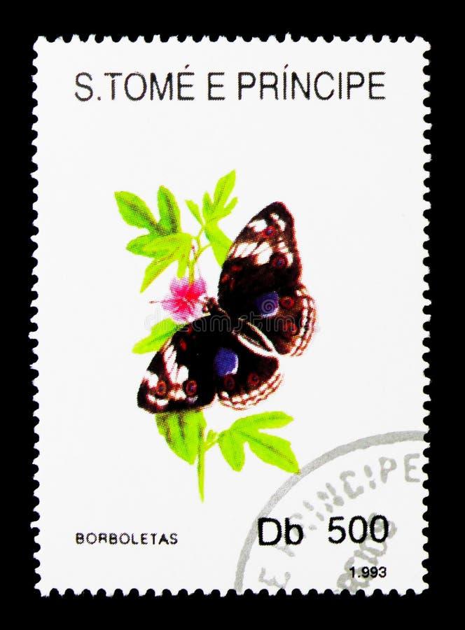 Бабочка Heliconian (sp Heliconius ), serie, около 1993 стоковая фотография