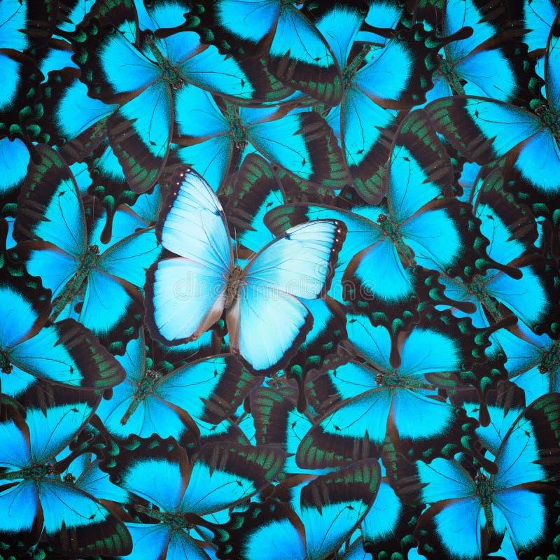 Бабочка Swallowtail зеленого цвета моря стоковые изображения rf