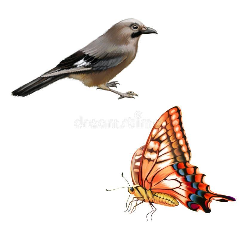 Бабочка Swallowtail Старого Мира, одичалая птица иллюстрация штока