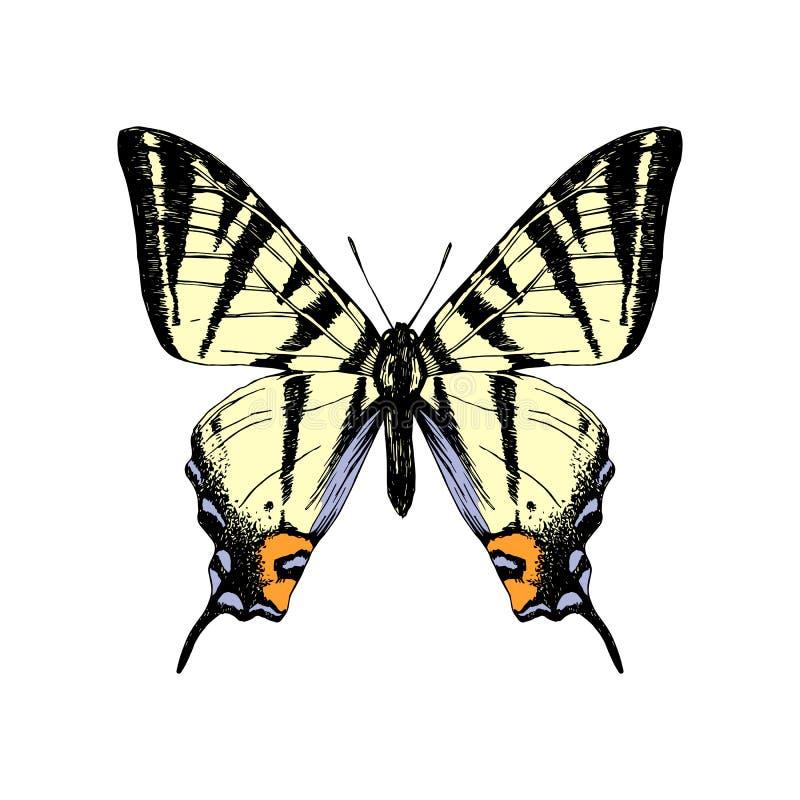 Бабочка swallowtail тигра руки вычерченная западная бесплатная иллюстрация