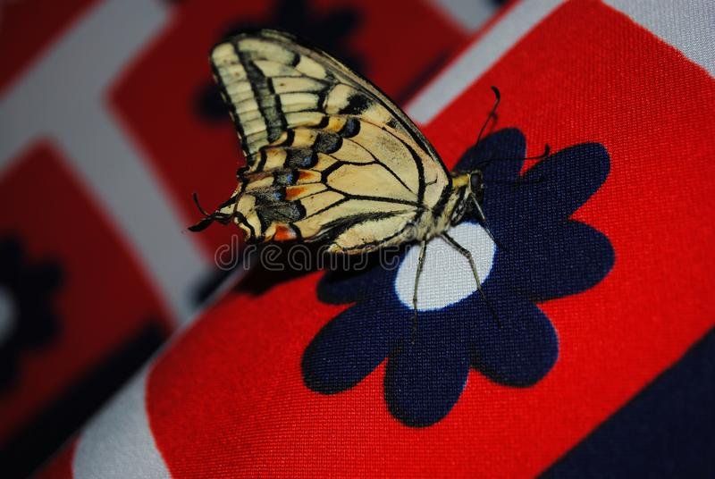 Бабочка swallowtail тигра сидя на темно-синем напечатанном цветке, мягком красном striped bokeh стоковое изображение