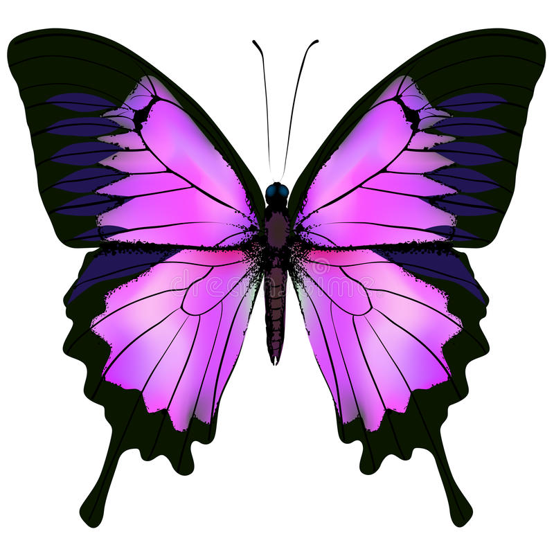Бабочка Vector иллюстрация красивого розового и фиолетового цвета иллюстрация штока