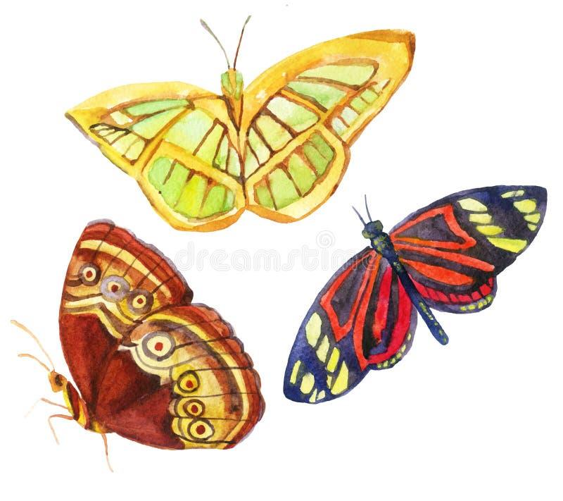 Бабочки акварели изолированные на белой предпосылке
