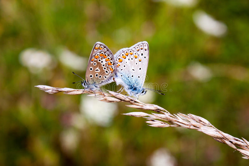 Бабочки в природе стоковая фотография rf