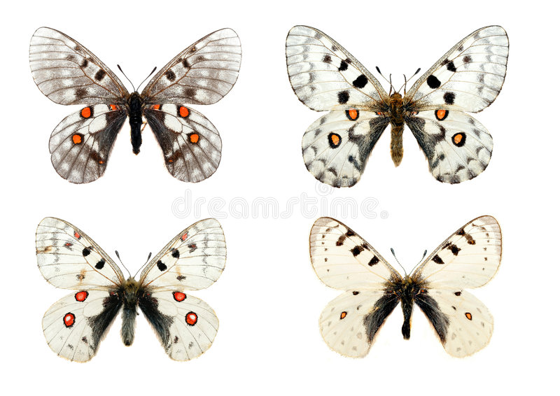 бабочки изолировали стоковые изображения rf