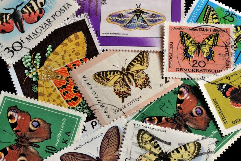Бабочки на штемпелях стоковые фотографии rf