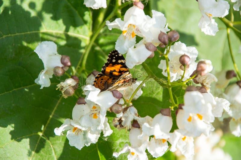 Бабочки одна из самых изумительных тварей стоковые изображения
