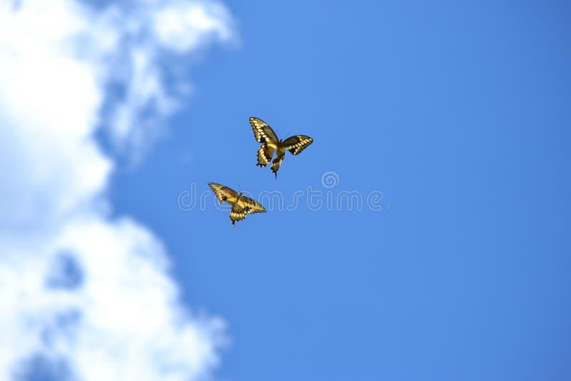 2 бабочки одной при гандикап наслаждаясь ярким голубым небом и тучными облаками стоковое фото rf