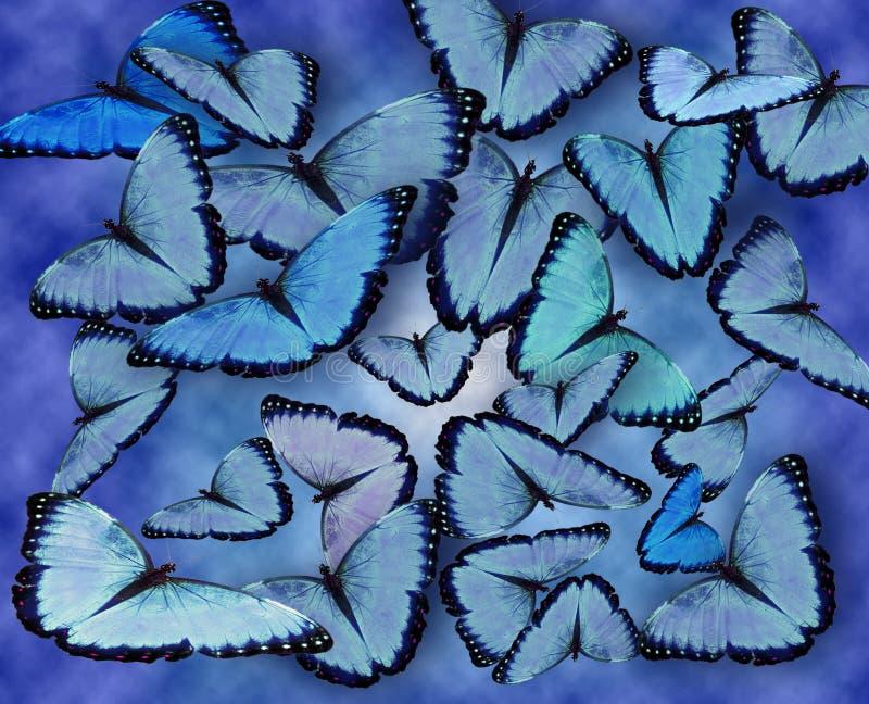 бабочки сини предпосылки стоковое фото