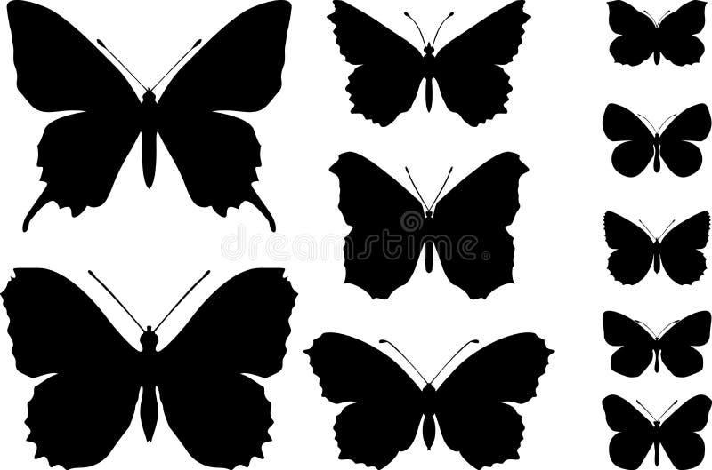 бабочки стоковая фотография