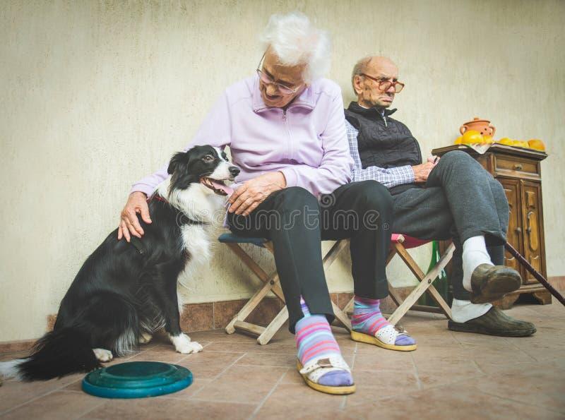 Бабушка штрихуя шаловливую собаку стоковые фото