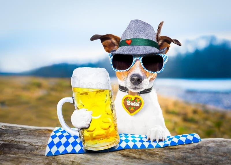 Баварская собака пива стоковая фотография rf