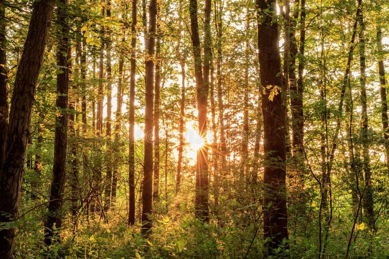 Баварское лето Forrest стоковое фото rf
