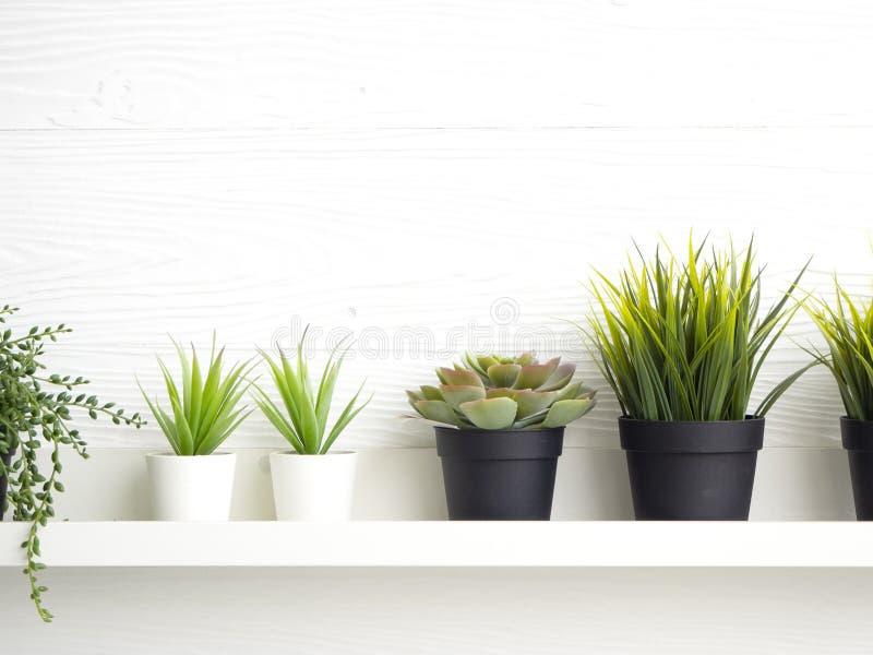 Баки с succulents на таблице стоковые фото