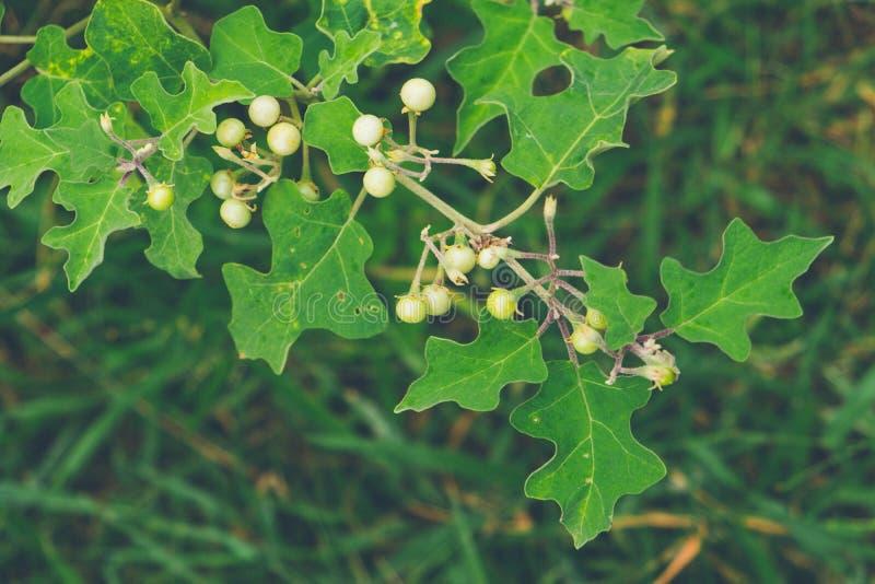 Semințe de dovleac cu miere pentru bărbați: compoziție, indicații și contraindicații