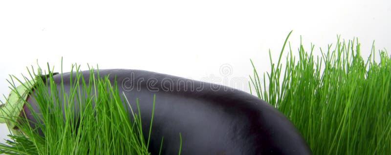 баклажан стоковое фото