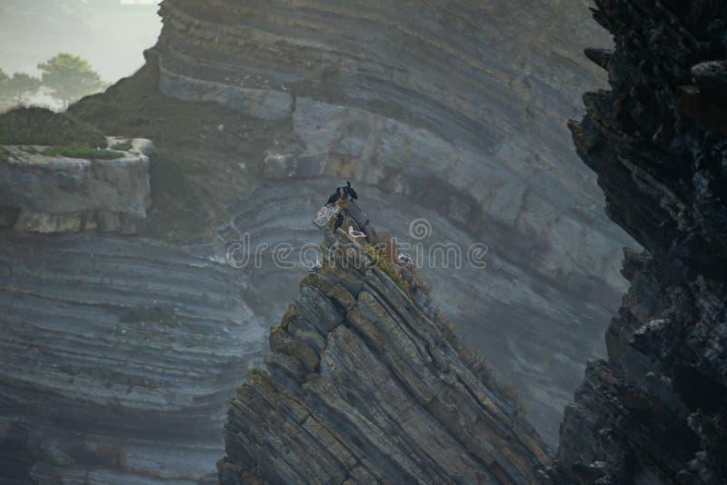 Бакланы, чайки и деталь скал побережья в Barrika стоковое изображение