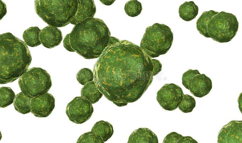 Бактерии вирус представляет в зеленом цвете на белом 3D представляют иллюстрация вектора