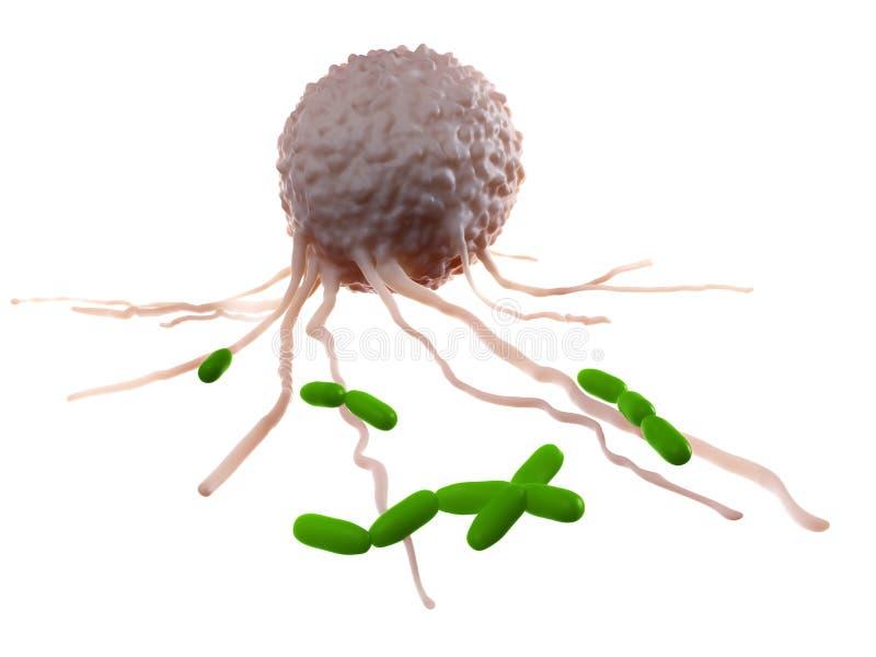 Бактерии лейкоцита атакуя иллюстрация вектора
