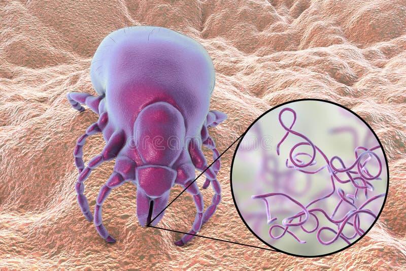 Бактерии заболеванием Lyme, burgdorferi Borrelia иллюстрация вектора