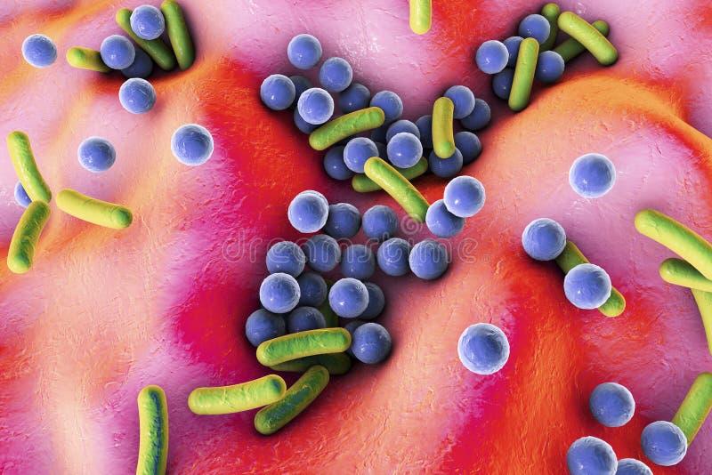 Бактерии на поверхности кожи, слизистой мембраны или кишечника иллюстрация вектора