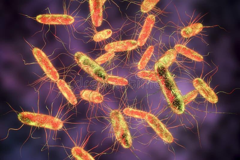 Бактерии салмонелл S тифы, s typhimurium и другие салмонеллы иллюстрация вектора