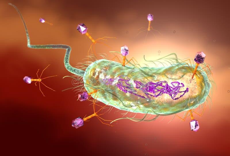 Бактериофаг атакуя e бактерии coli и ДНК впрыскивать Медицински точная иллюстрация 3D иллюстрация штока