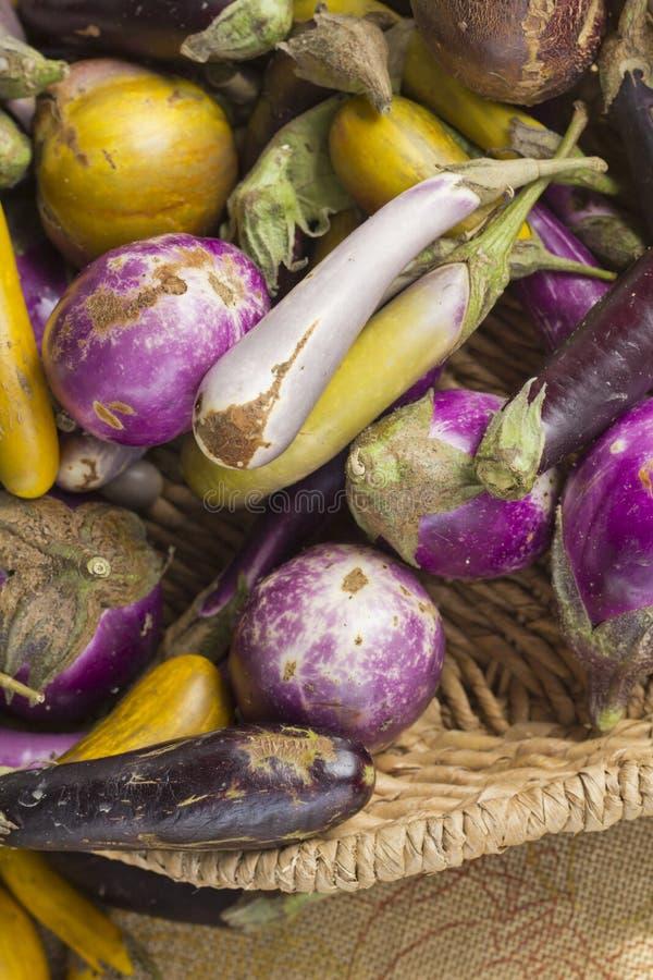 Баклажан разнообразия Heirloom стоковое фото