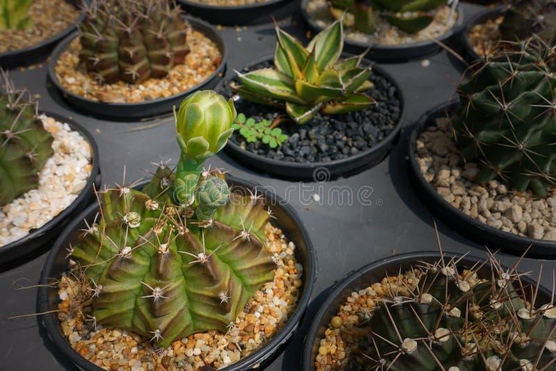 бак изолированный кактусом стоковое изображение
