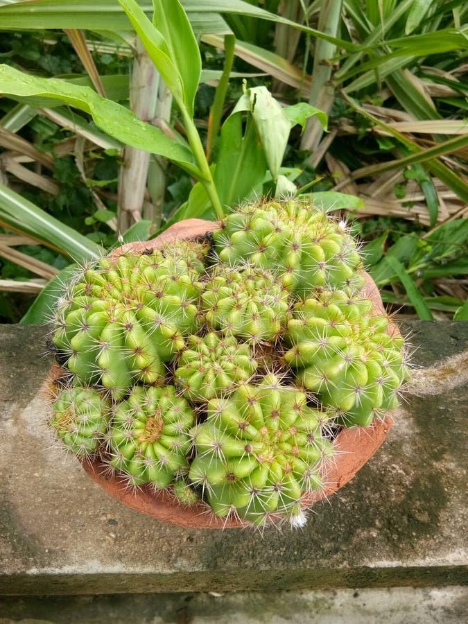бак изолированный кактусом стоковые фотографии rf