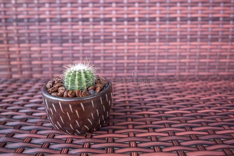 Бак кактуса с кофейным зерном стоковое фото rf