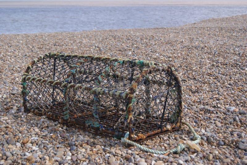 Бак Crabbing на теплом каменистом пляже стоковое изображение rf