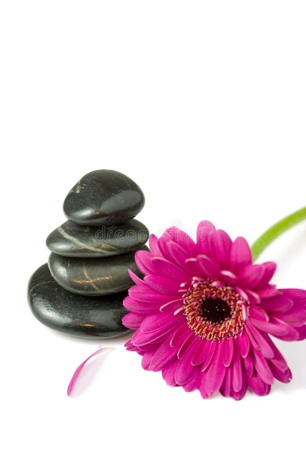 Download балансируя камушки цветка маргаритки Стоковое Фото - изображение насчитывающей как, массаж: 6869428