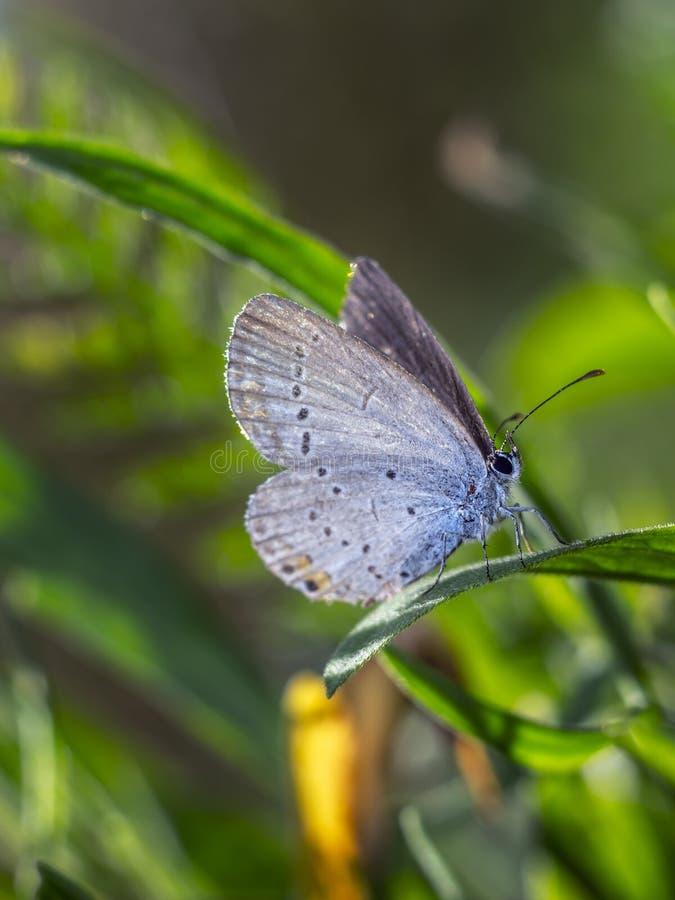 Балерина бабочки стоковое изображение rf
