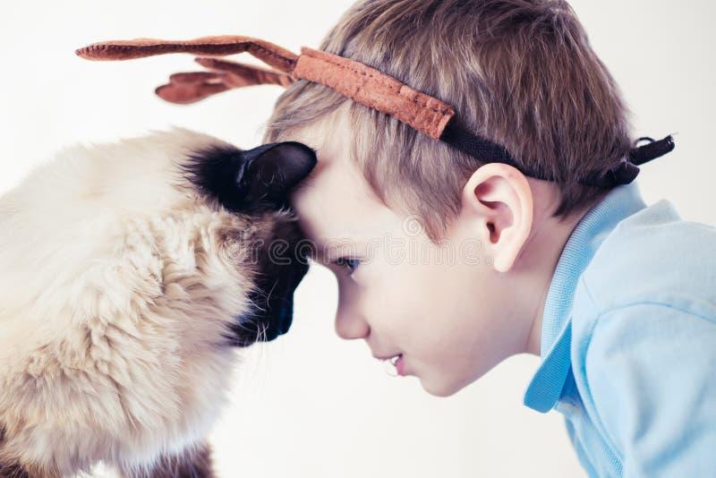 Балиец ребенка кота совместно сыграть молодой товарищ стоковые фотографии rf