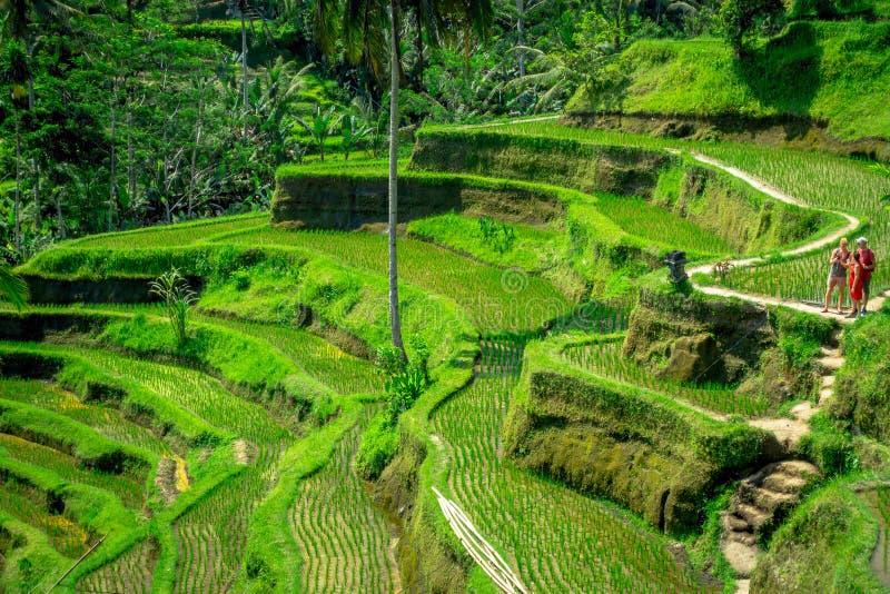 БАЛИ, ИНДОНЕЗИЯ - 5-ОЕ АПРЕЛЯ 2017: Неопознанные люди смотря самые драматические и самые эффектные террасы риса в Бали стоковые фото