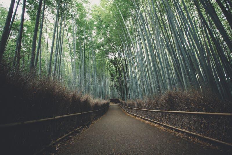 Бамбуковая дорожка леса со стилем года сбора винограда фильма стоковые изображения