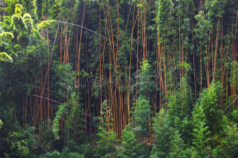 Бамбуковая листва в tropicals стоковое изображение