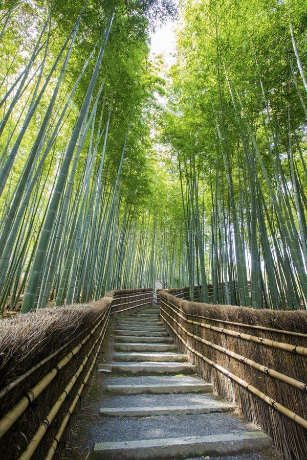 Бамбуковая дорожка леса стоковое изображение
