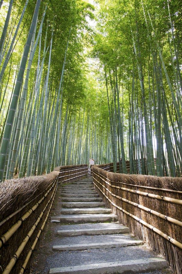 Бамбуковая дорожка леса стоковое фото