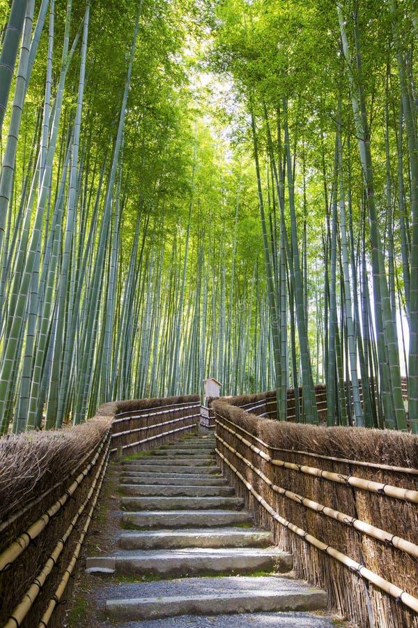 Бамбуковая дорожка леса стоковые изображения rf