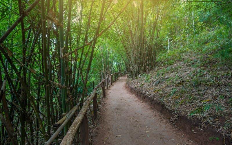 Бамбуковая дорожка леса стоковая фотография
