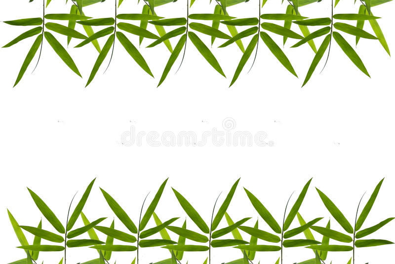 Бамбуковая предпосылка границы лист иллюстрация штока