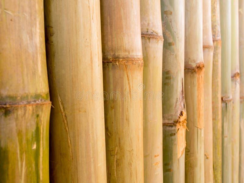 Бамбуковая предпосылка загородки стоковые фото