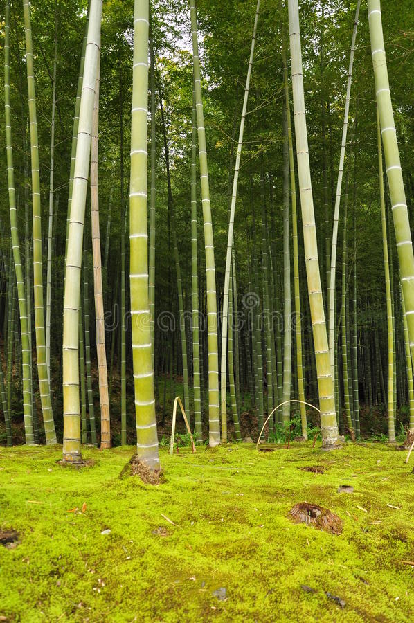 Бамбуковая роща стоковые изображения