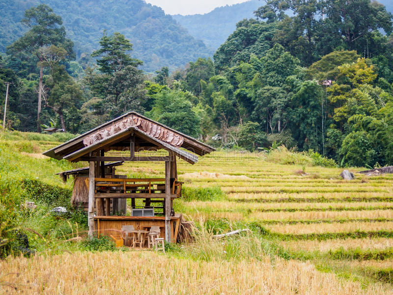 Бамбуковое укрытие стоковое фото
