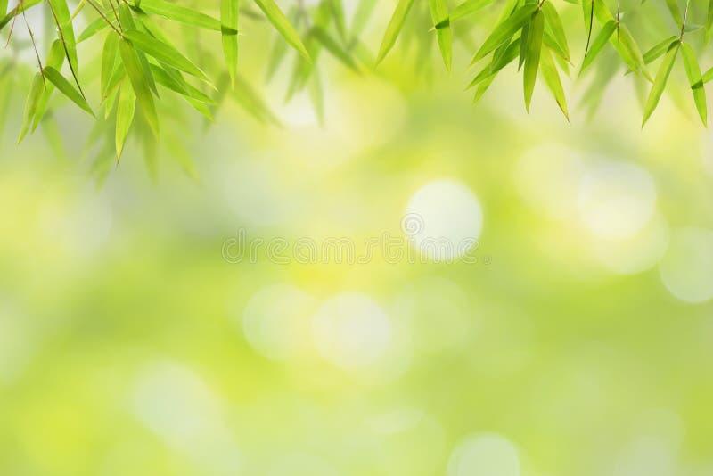 Бамбуковые лист и мягкая зеленая предпосылка bokeh стоковые фото