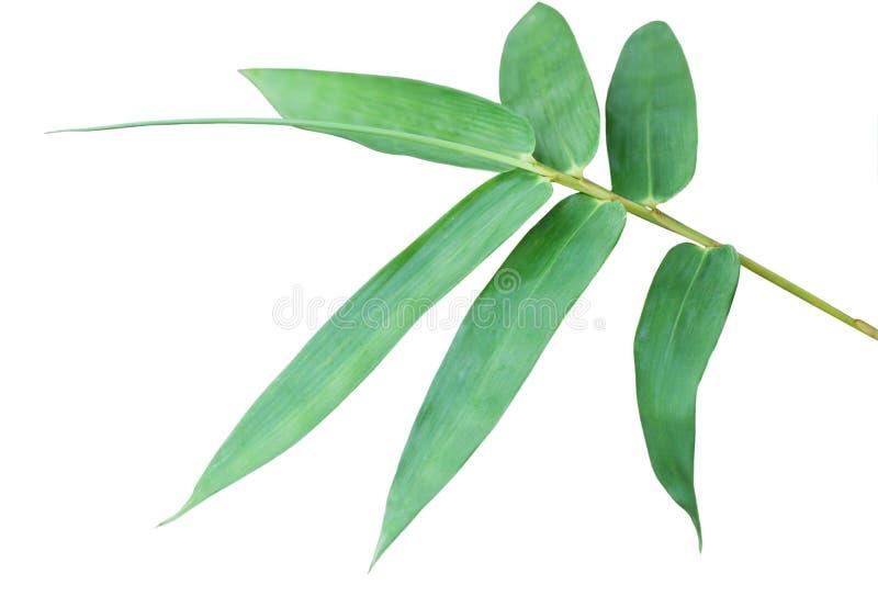 Бамбуковые лист стоковые фотографии rf